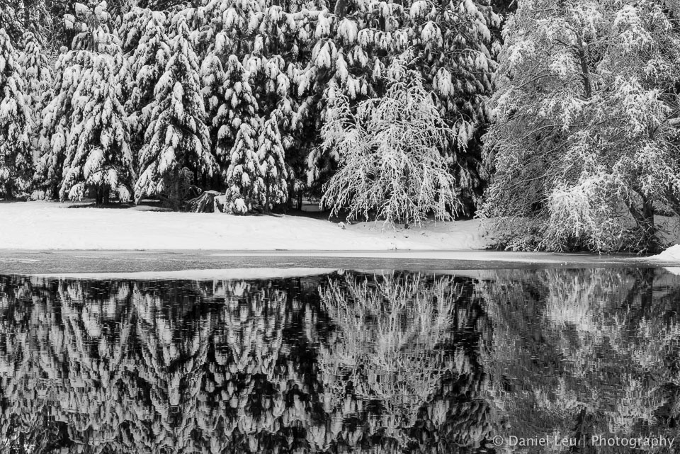 Snowy Trees at Merced River