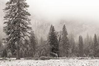 DL_20151115_DSC1758-Yosemite-Snow.jpg