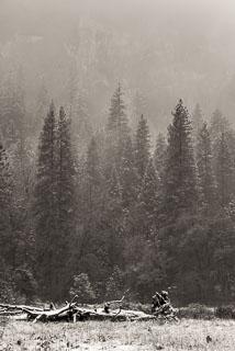 DL_20151115_DSC1765-Yosemite-Snow.jpg