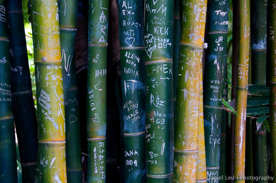 Bamboo treees