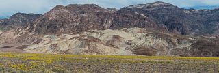 DL_20160227_DSC4434_Death_Valley_Wildflowers-Pano.jpg