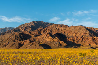 DL_20160227_DSC4516_Death_Valley_Wildflowers.jpg