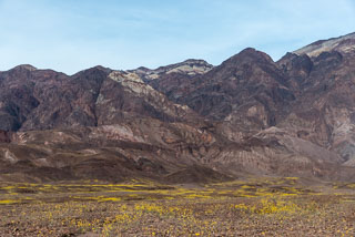DL_20160228_DSC4578_Death_Valley_Wildflowers.jpg