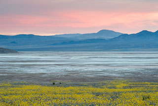 DL_20160228_DSC4708_Death_Valley_Wildflowers.jpg