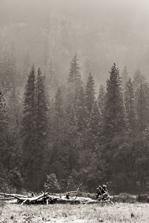 DL_20151115_DSC1765-Yosemite-Snow.jpg