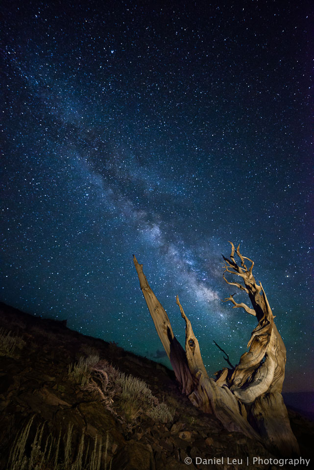 Bristlecone Pine Pointing at Milky Way